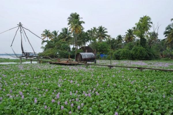 منطقة كومبالنجي Kumbalangi