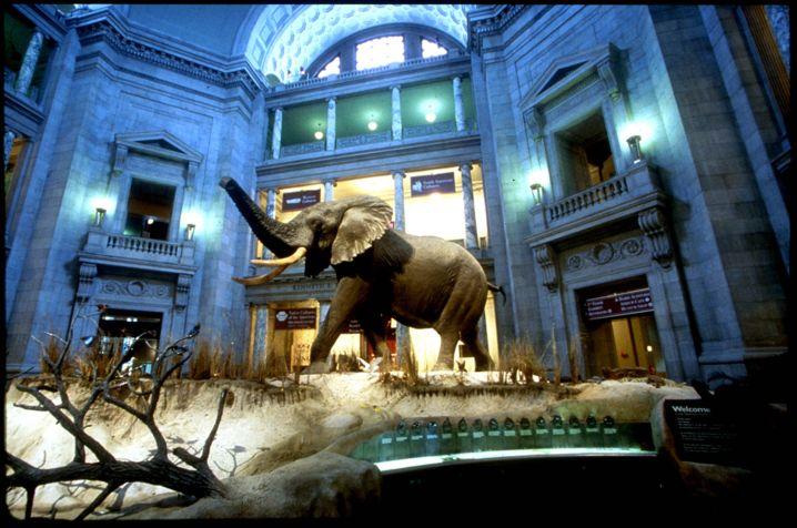 متحف سميثسونيان الوطني للتاريخ الطبيعي