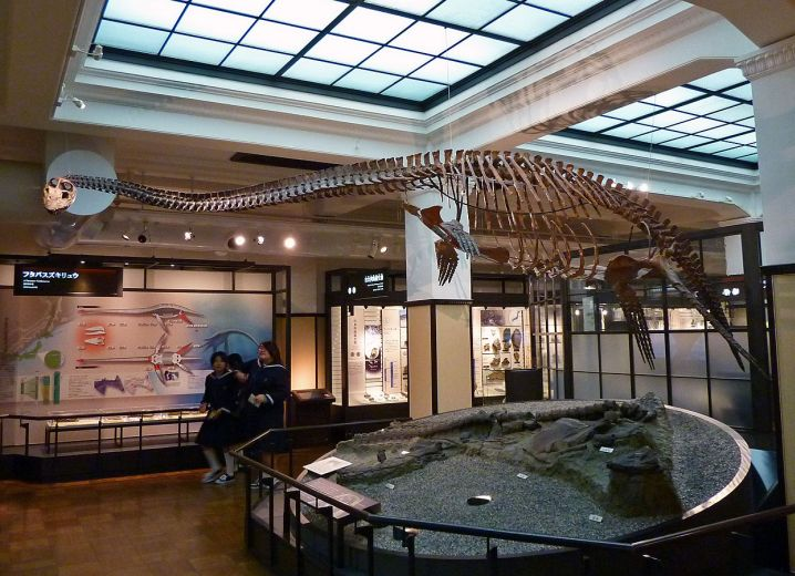 متحف طوكيو الوطني