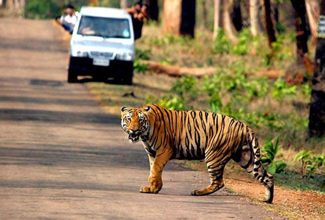 حديقة Bandhavgarh الوطنية