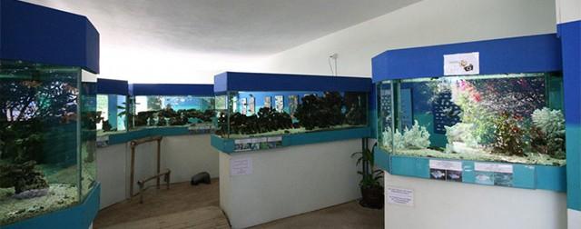 حوض سمك موريشيوس