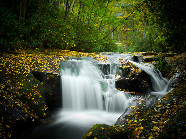 غابات تشاتاهوتشي الوطنية