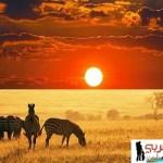 تقرير عن السياحة في كينيا و معالم الجذب الأعلى تقيماً فيها