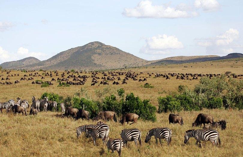 محمية ماساي مارا الوطنية