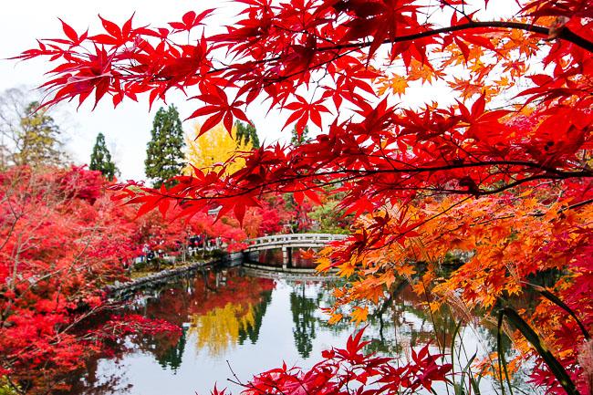مدينة كيوتو اليابانية