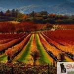 أجمل 7 مشاهد لرؤية فصل الخريف من مختلف مدن العالم