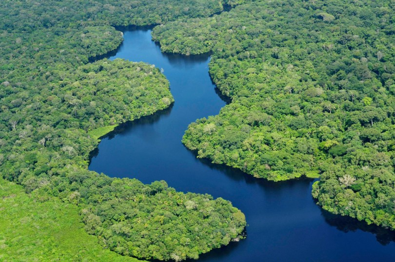 استكشاف الغابات