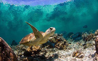 جزر السلاحف