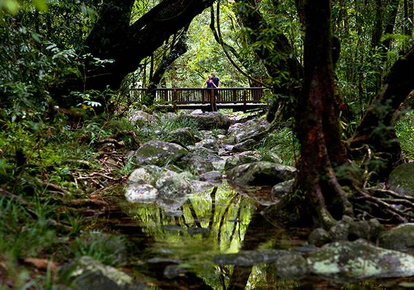 حديقة دينتري الوطنية