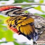 لمحبي الطيور تقرير مصور لأجمل اماكن للطيور النادرة حول العالم
