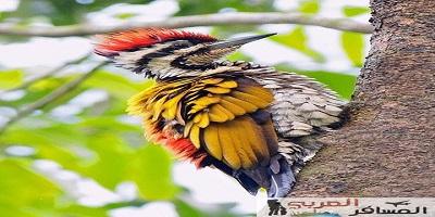 اماكن للطيور النادرة