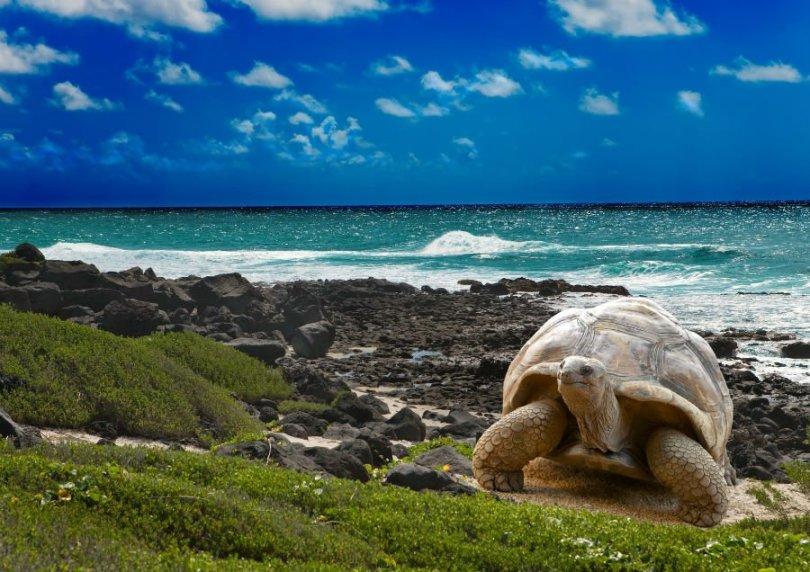 أرخبيل غالاباغوس