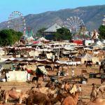 نصائح راجستان .. الولاية الهندية الساحرة