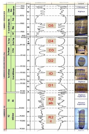 Geologic cross section and Drains of Hassi-Messaoud field [4]