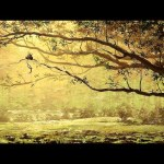 Forest – Speed Painting (#Paint Tool SAI) | CreativeStation GM