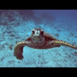 Oceans 101 | National Geographic