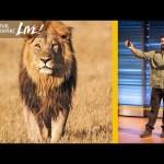 Filming Africa's Top Predators : Beyond 'Savage Kingdom' (Part 2) | Nat Geo Live