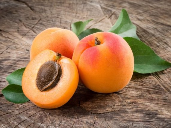 Apricots: The Golden Seeds of the Sun