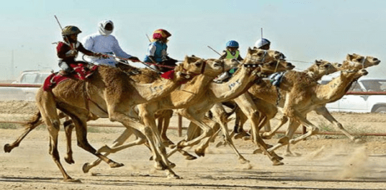 "The Importance of that ""Splendid Beast""--the Camel--to the Arab World"