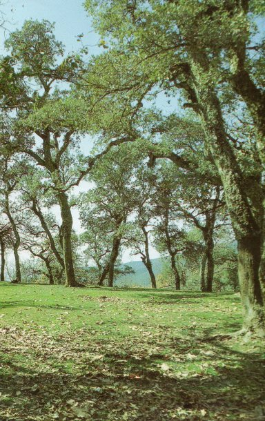 From Tunisia's Forested Mountains to Its Roman Past