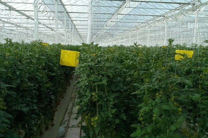 This Startup Wants to Revolutionize 'Farming' in the Arab World
