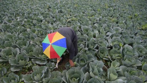 Apples and Amphetamines: How Organised Crime Threatens Arab Food Trade