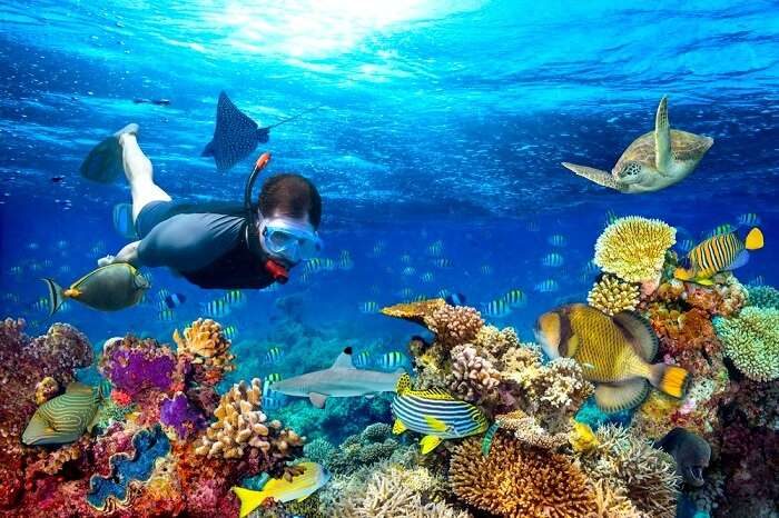 Snorkeling and Diving Sites in the Arab World