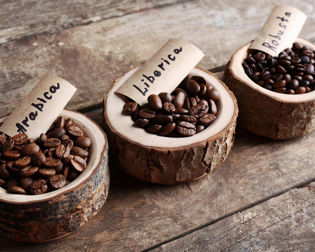 Verschil tussen Robusta en Arabica koffiebonen