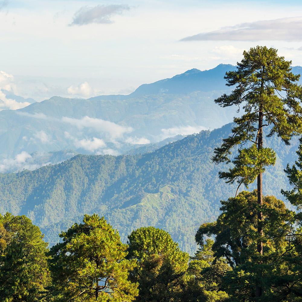 Arabica koffie uit Guatemala Huehuetenango