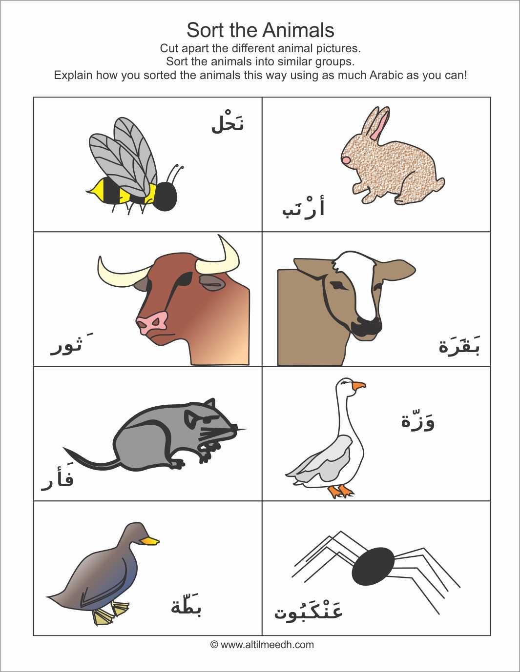 Farm Animals Sorting Cards Set