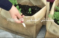 My little garden - Arabic video 3 - Harvesting radishes