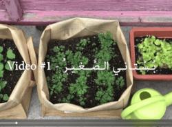 My little garden – part 1 – Garden tour