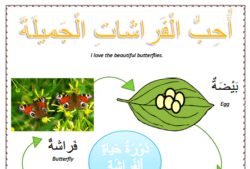 Spring worksheets - Lesson 4 the butterflies arabic