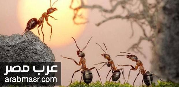 لغة النمل وهو يتكلم كما اثبت العلماء فهل النمل يتكلم ؟ شاهد بالصور والتفاصيل
