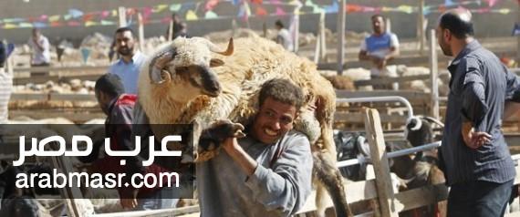 تحذير وزارة الزراعة بتضحية الذبح فى الشوارع والعمارات لعيد الاضحي المبارك