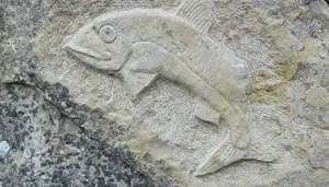 اشارة السمكة