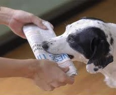 dog_newspaper