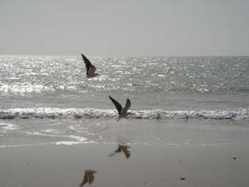 Con alas y de gira