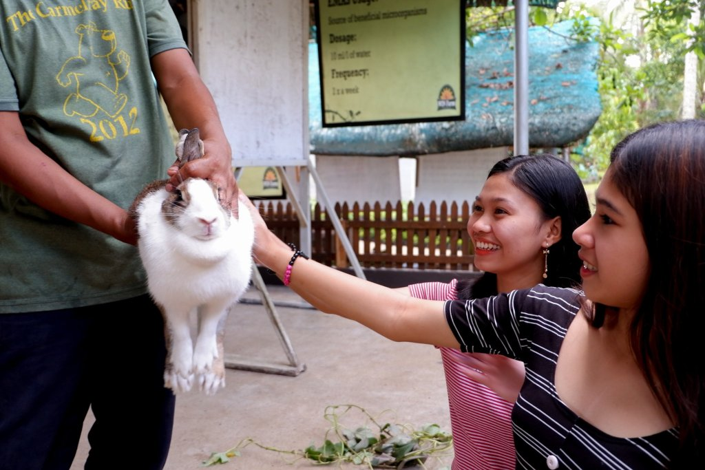 """ALT=""""this is the white rabbit you can play at win farm"""""""