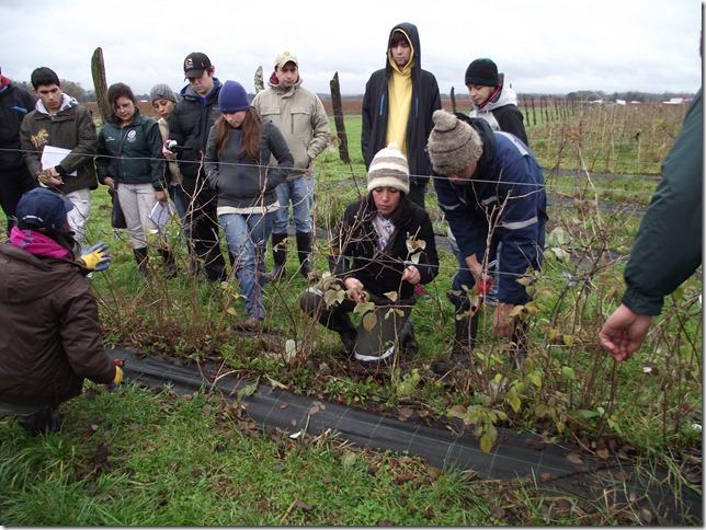 técnico agrícola 2