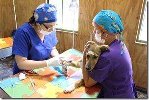 FOTO operativo veterinario villa cordillera