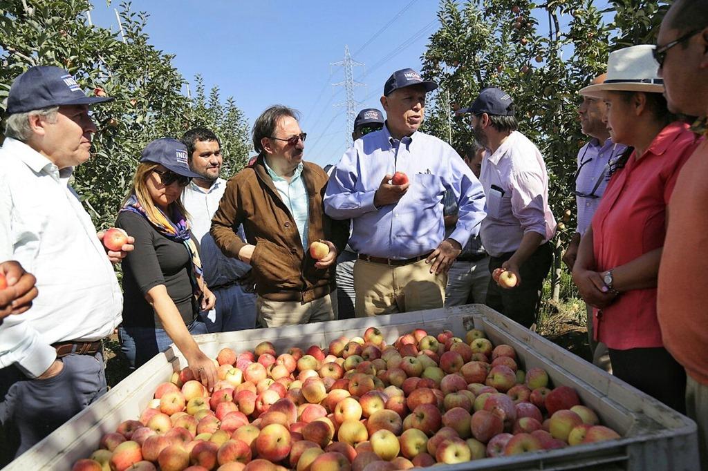 Resultado de imagen para campo agricultura la araucania