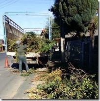 FOTO segundo operativo de escombros y ramas