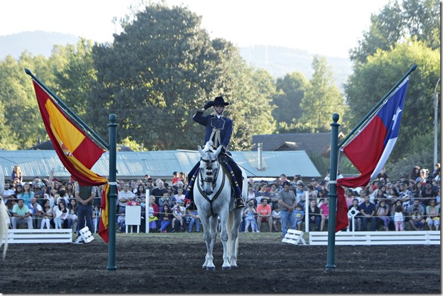 FOTO caballos andaluces 3