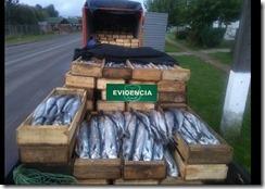 pescadoteodoroschmidt