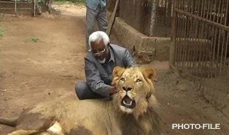 warancade and lion(1)