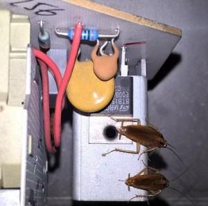desinsectar una casa frente a cucarachas