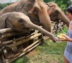 Elephants, Chiang Mai, thailand, arboursabroad