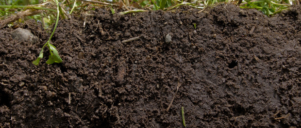 What a Healthy Soil Looks Like