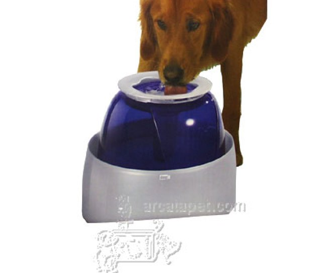 Dog It Drinking Fountain Large Dog Water Food Other At Arcata Pet Supplies